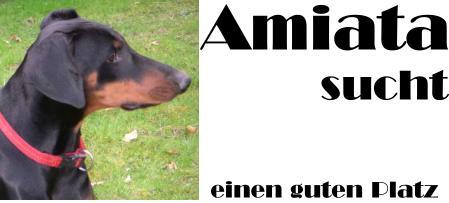 Amiata sucht
