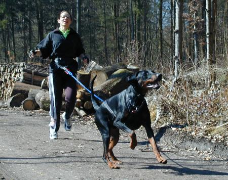 CaniCross-Training