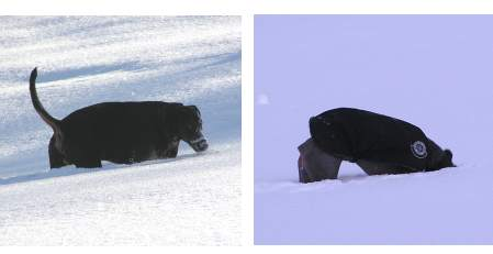 © www.huehnerhunde.de - Wo? ist der Kong???