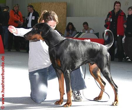 © www.huehnerhunde.de/