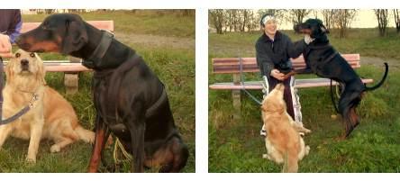 Kira & Aramis - Hundeplausch