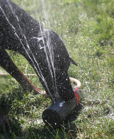 Rasensprenger-Wasserspiele